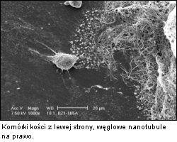 Kości nanotubule
