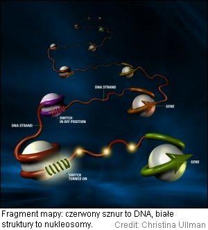 Nukleosomy