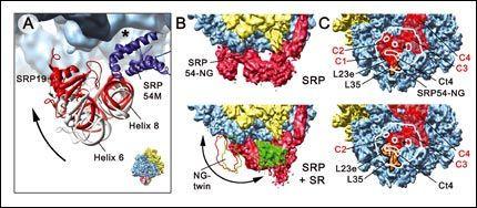 sortowanie białek