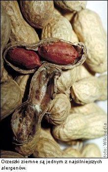 alergia na orzeszki ziemne