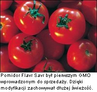 GMO Pomidor