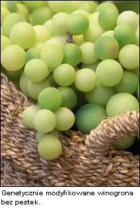 Transgeniczne winogrona